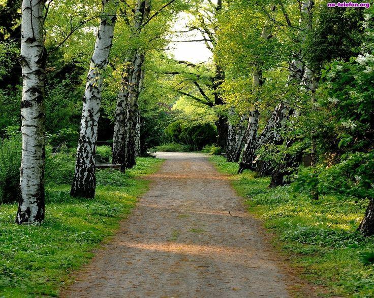 Brzozy, Las, Ścieżka
