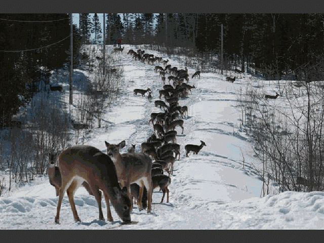 ΑΕΤΟΣ GREVENA ΓΡΕΒΕΝΑ: Χιονισμένα τοπία (Δείτε πολλές φωτογραφίες)