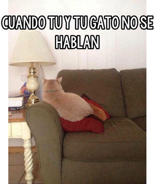 Cuando tú y tu gato no se hablan. Todo es tranquilo pero solitario😞