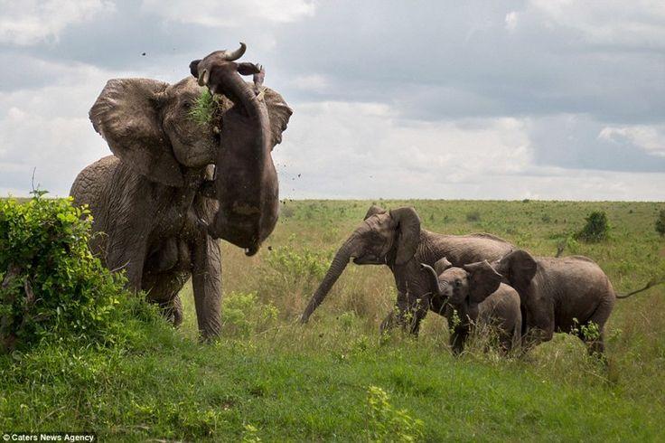 3. Со слонами лучше вообще не связываться