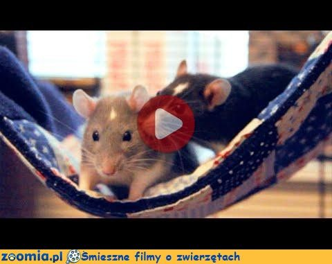 Einstein i Darwin Śmieszne Filmy Inne zwierzęta http://Zoomia.pl