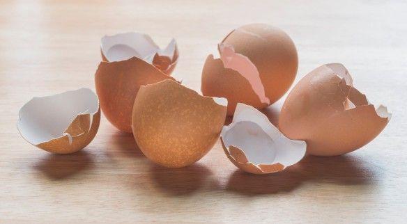 Nem is gondolnánk, hogy a tojás héját mennyi mindenre használhatjuk. Az összezúzott tojáshéj remekül alkalmazható kártevők irtására, bőrpuhítónak, tisztítószerként vagy madáreleségként is.
