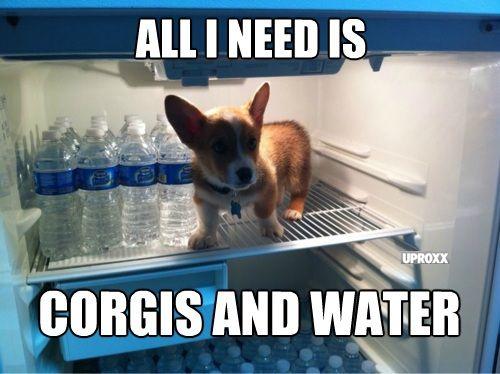 CORGI FRIDAY!: Cold Corgi, Adorable Doggies, Corgi Friday, Small Dogs, True Facts, Corgi Puppys, Animal Friends, Animal Funny, Corgi Stuff