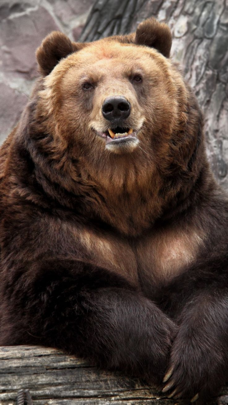 1080x1920 Wallpaper bear, zoo, nature, reserve, muzzle