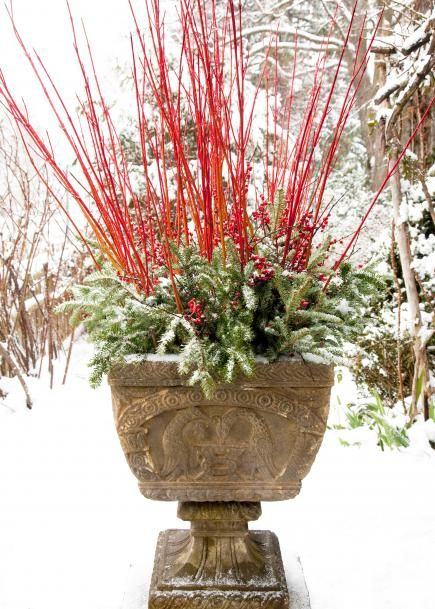 Cardinal dogwood spikes tower about a Fraser fir and winterberry holly pairing. More winter container gardens: http://www.midwestliving.com/garden/container/winter-container-gardens/page/10/0