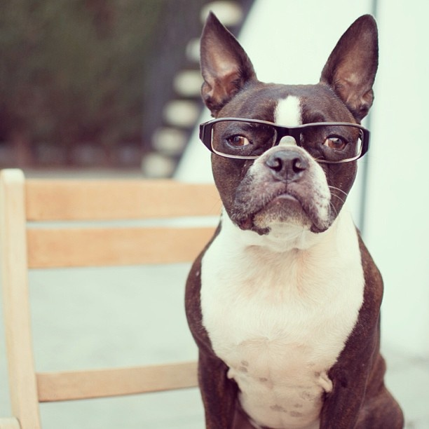 why so serious? #bostonterrier | : BT love : | Pinterest ...