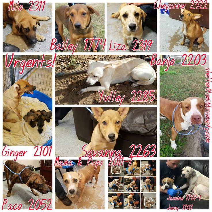 11/21/16-SUPER URGENT - Smith County Animal Control & Shelter Like This Page · 1 hr ·    Absolutly out of room here at the shelter!! Busting at the seems with urgent dogs!! Please give us a Thanksgiving miracle and rescue or adopt these babies! All dogs below are current urgents as of 11-21-16.  https://docs.google.com/forms/d/1GyuqfYsljTPBnM8I6VoTccYG0FAmTvFOXcXCTqL_yqc/viewform?c=0&w=1