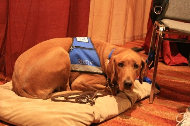 This is Rusty, who is an autism service dog. | 20 Dogs Who Do Incredible Work For Humans
