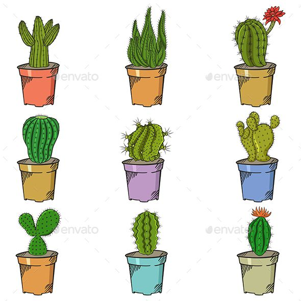 Hand Drawn Cactus Set Ilustracion De Cactus Cactus Dibujo