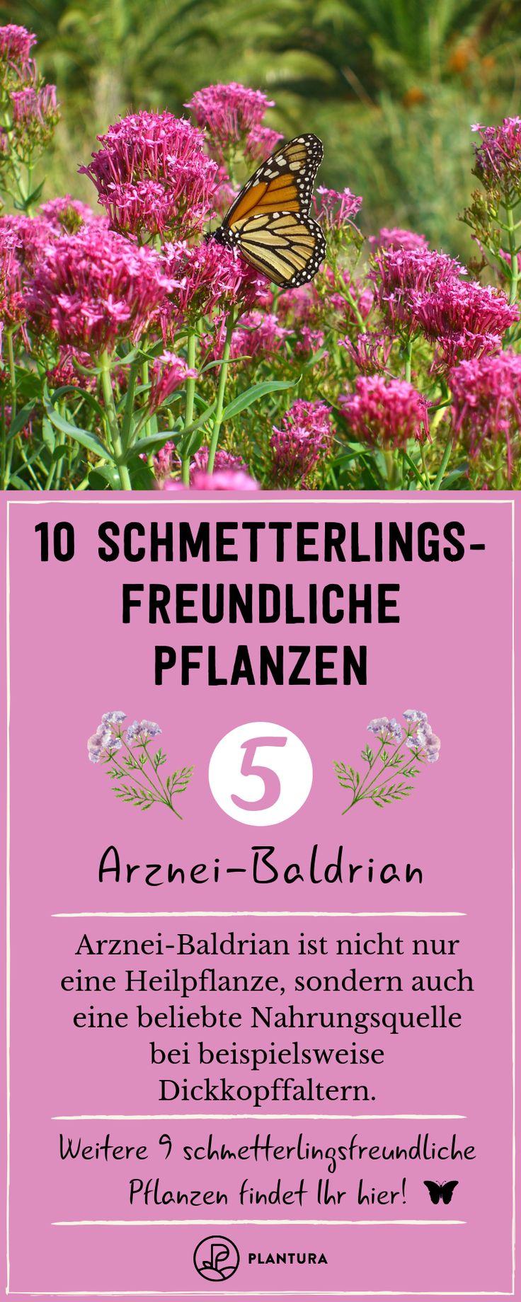 Schmetterlingsfreundliche Pflanzen: Die 10 besten Arten   – Tierfreundlich gärtnern