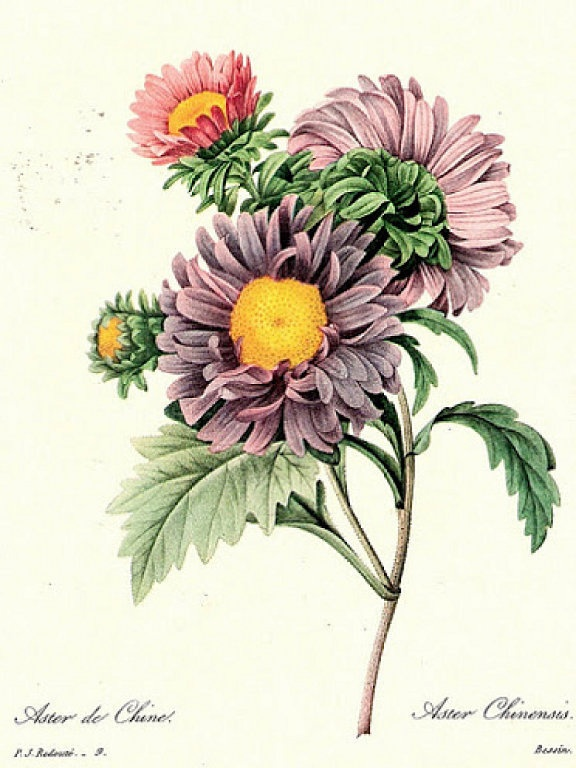 Mis Laminas Para Decoupage Botanical Drawings Flower
