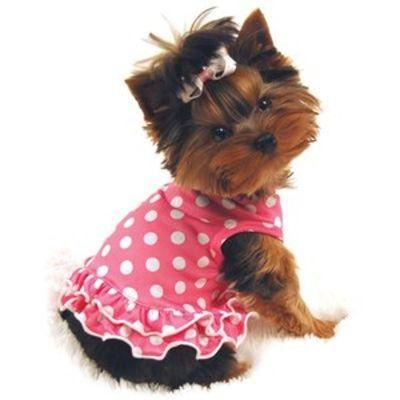 pretty doggy