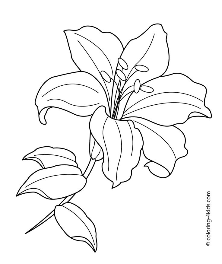 lilium flower coloring pages for kids printable free - Flowers Coloring Pages