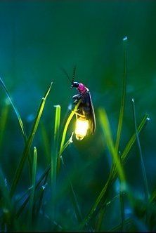 lightening bug- remember trying to catch them as a kid and put in a jar!