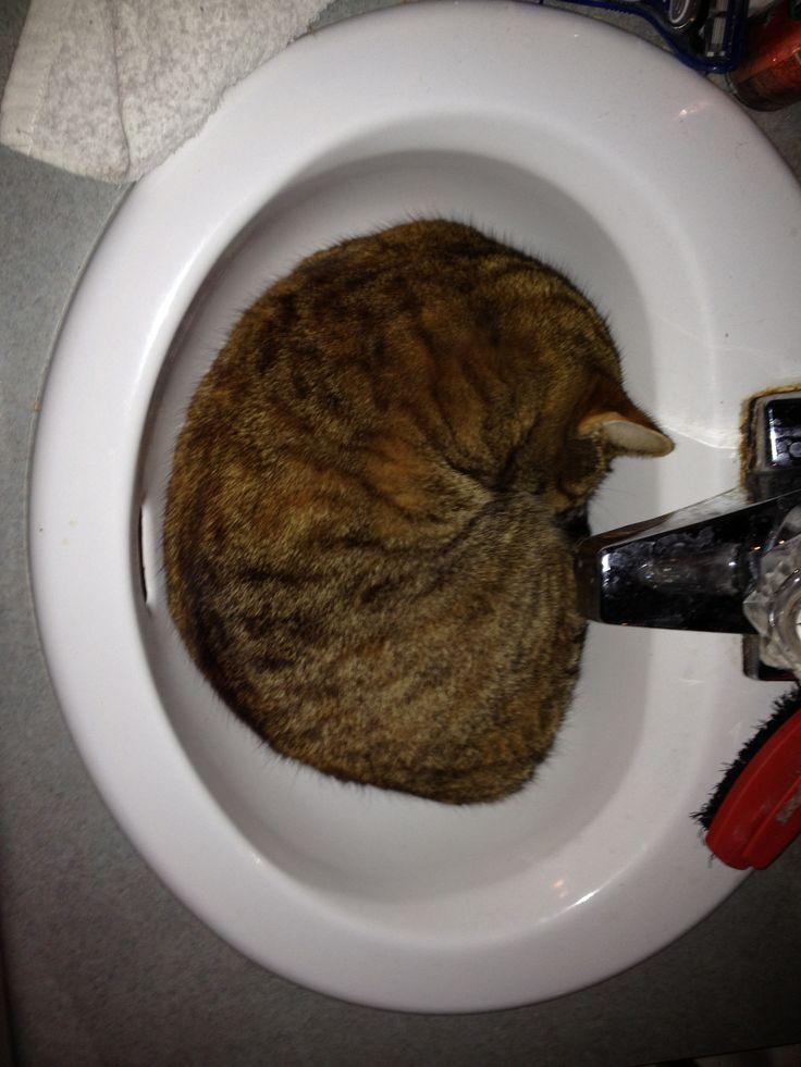 Sink cat Mimi