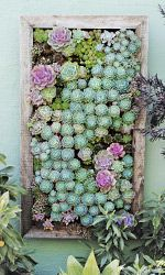 Look at the beautiful colours of this vertical garden