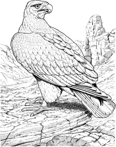 21 best Eagle Coloring Pages images on Pinterest ...