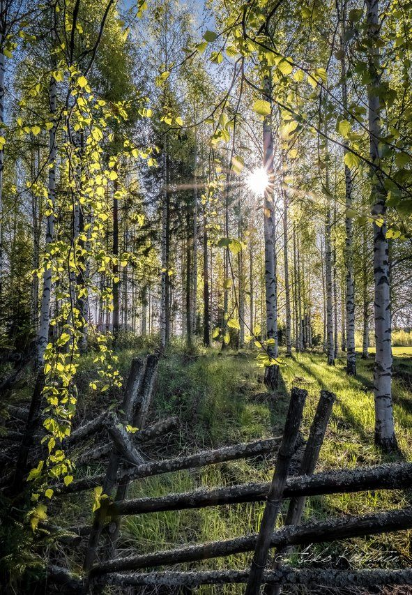 Pin by Haccapell on Suomea ja suomalaisuutta in 2020