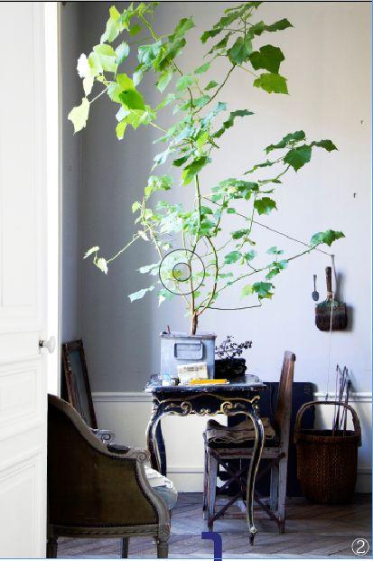 Sparmannia africana - Just igår skickade vi tidningen till tryck med ett fint reportage hos den bokaktuelle stylisten Hans Blomquist som bor i en hisnande vacker lägenhet i Paris från FÖRRFÖRRA...