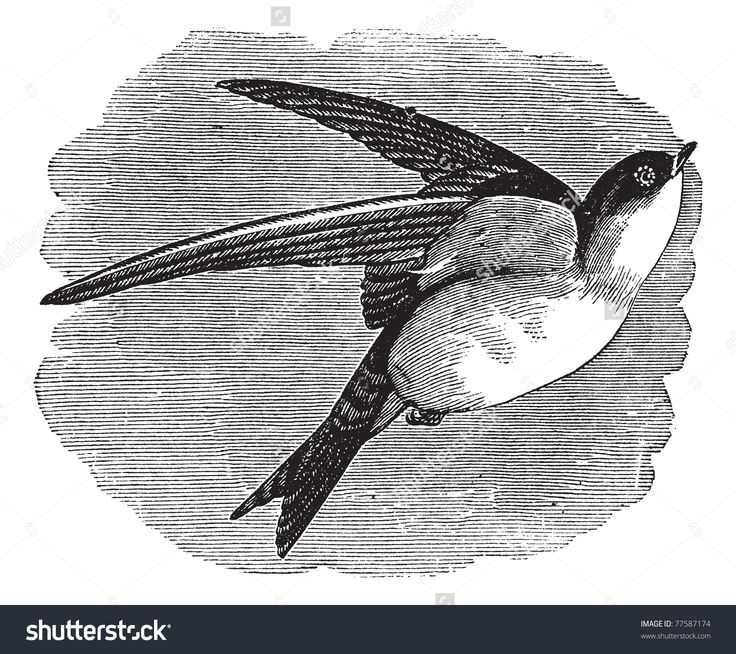 Common House Martin Or Delichon Urbicum Or Northern House Martin ...