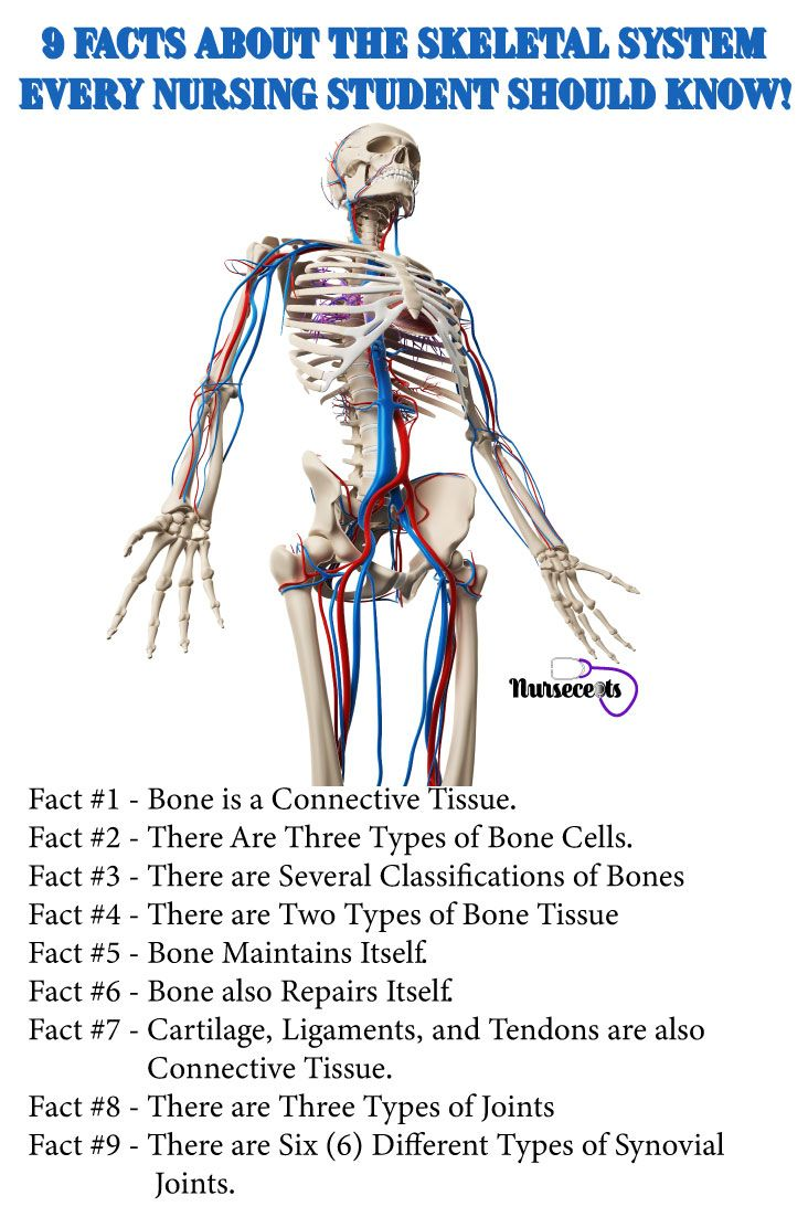 22+ What two body systems are affected by osteoporosis ideas