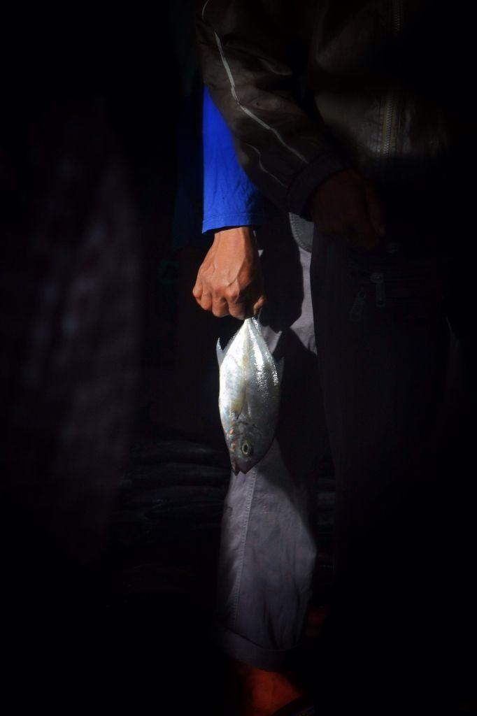 Pelelangan Ikan Paoter Makassar, Sulawesi Selatan, Indonesia