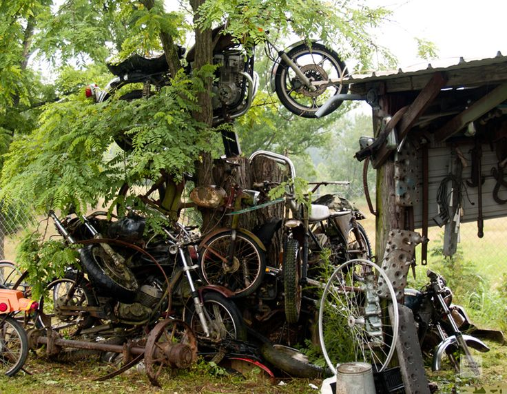 Motorcycle sculpture in tree motorcycle shop near