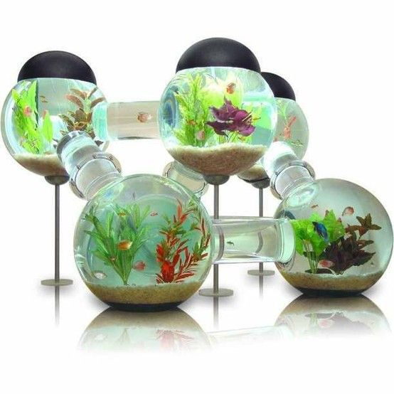"""if i had fish i would love to have one of these!! i have a turtle, maybe she would like it too! a super modern """"house"""""""