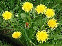 Codul Rosu: Tratamente cu Dulceata din Plante si Legume
