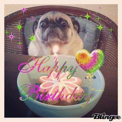 New trending GIF on Giphy. happy birthday pug blingee happy birthday to me. Follow Me CooliPhone6Case on Twitter Facebook Google Instagram LinkedIn Blogger Tumblr Youtube