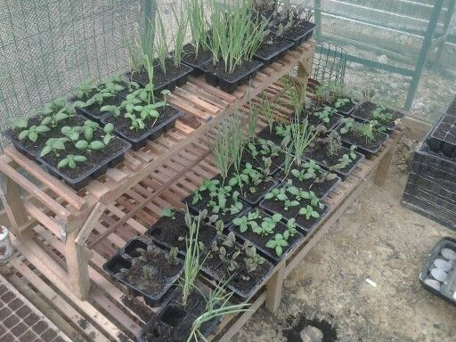 Hearb Garden   Nursery   Pinterest   Garden, Herb garden and Nursery