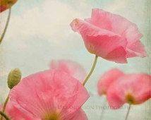 Цветок мака фотография, Винтаж, потертый шик стена искусство, розовый и голубой, Красный Принт, Принт природа, девушки спальня Декор