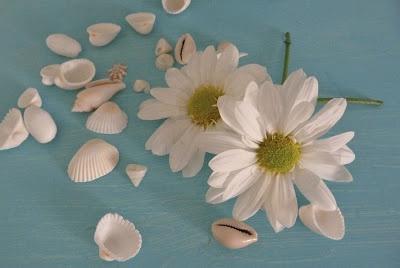 beachcomber daisies shells