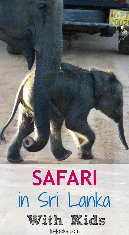 safari with kids in Udawalawe National Park, Sri Lanka