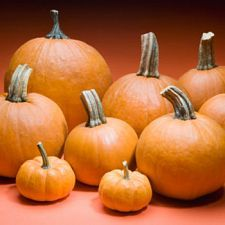 The Power of Pumpkins | All Diet Tips | Diet&Fitness | MyDailymoment.com