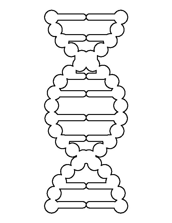 what is a template in dna - dna pattern use the printable outline for crafts