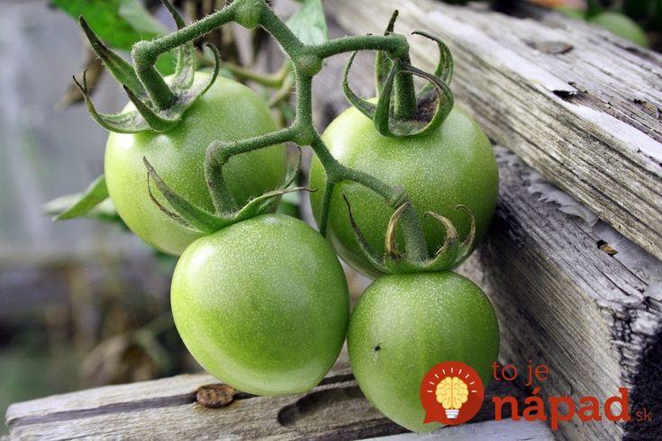 Aj vaše paradajky nie a nie dozrieť? Vyskúšajte overené tipy, vďaka ktoré ich…