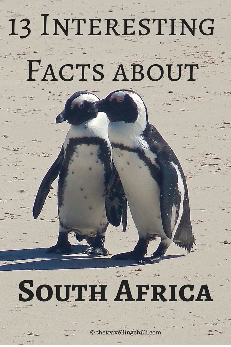 13 Interesting Facts About South Africa - Things most people don't know about South Africa