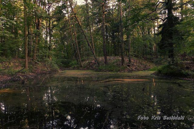 szlaki i bezdroża: Miechowice - leśne krajobrazy