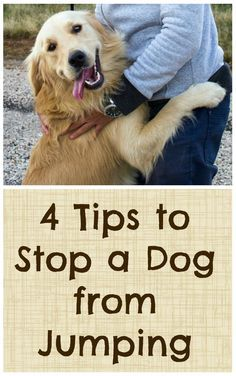 Dogs jumping up might not be the most endearing thing they do - great tips on how to curb their behavior! #dogownertips #dogtraining