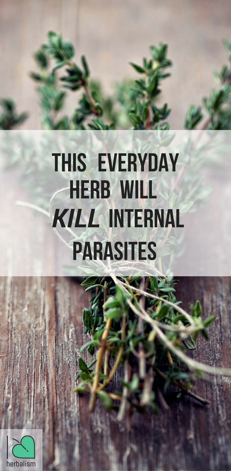 9 everyday herbs that can eliminate internal Parasites! Cloves, garlic, black walnut, wormwood an bay leaves
