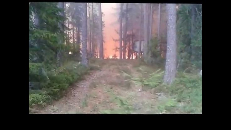 Eldstorm i skogsbranden i västmanland sommaren 2014