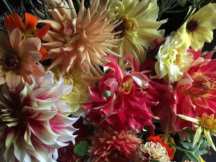 Dahlias on the tennis court in early September. #dahlia #garden #flowers