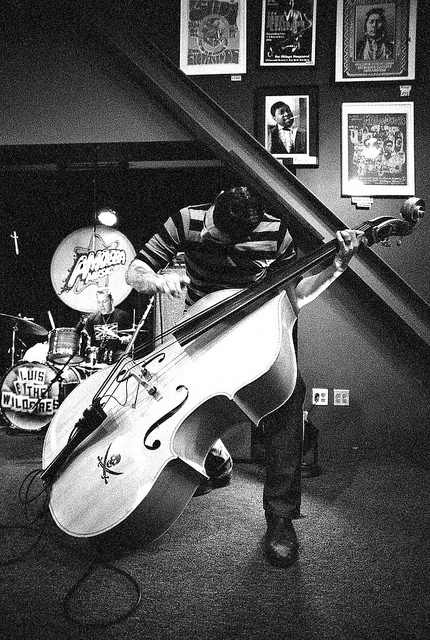 So I have a thing for rockabilly bass players....