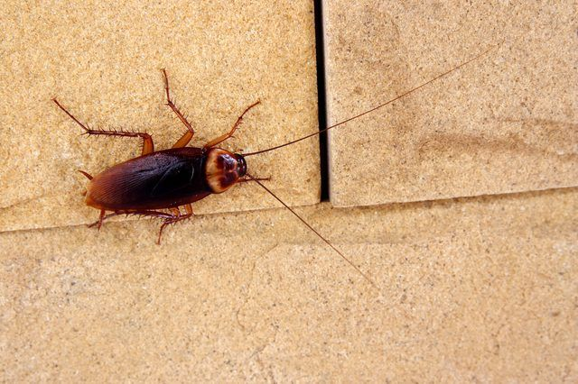 Can Baby Roaches Live In A Fridge Roach Infestation Insect Control Pest Control