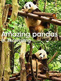 Giant panda - excercising