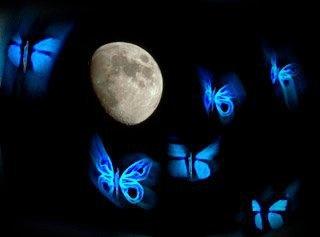Una mariposa es un símbolo de una transformación y de libertad en la vida, una mariposa pasa de arrastrarse en la tierra a tocar el celeste azul del firmamento con una sensación de ligereza, en pocas palabras podría tratarse del mismo significado de la vida humana, al final todos luchamos por ser mariposas.