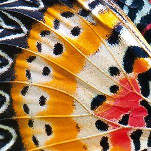 Quadro con Ali di Farfalla #farfalla #butterfly #art #canvas #quadro #quadri #abstract #madeinitaly #paintings #pictures #pintdecor #graphicollection