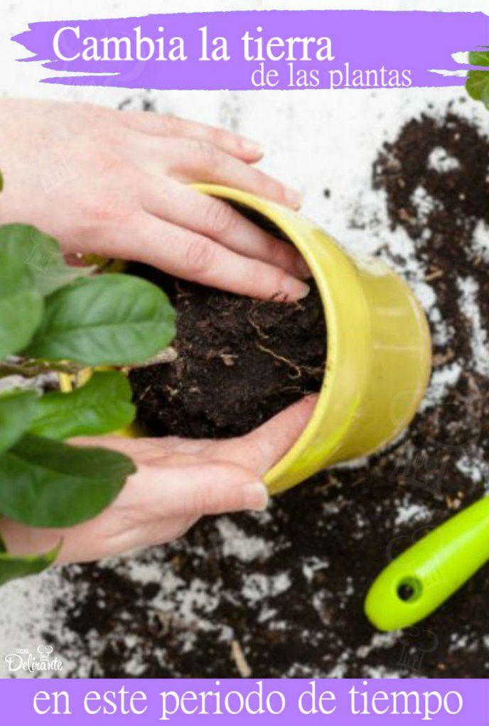 cuándo se debe cambiar la tierra de las macetas de las plantas de interior Celery, Vegetables, Nature, Gardening, Gardens, Potting Soil, Plants Indoor, Indoor Plants, Landscaping