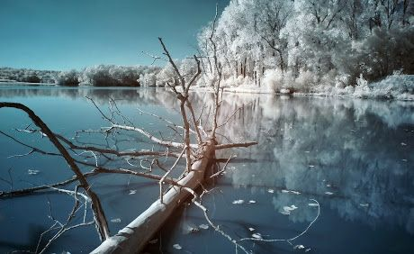 Colorful water and Snow Trees wallpapers
